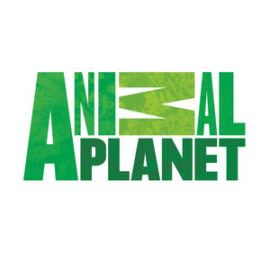 Watch Animal Planet UK Live Stream | Animal Planet UK Watch Online